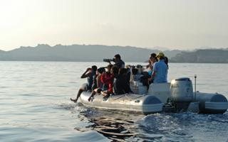 Bottlenose Dolphin Tracking in La Maddalena, Sardinia. Things to do in La Maddalena