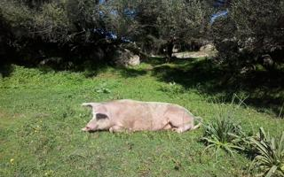 Life-tasting in a typical Gallura farmhouse. Things to do in Telti