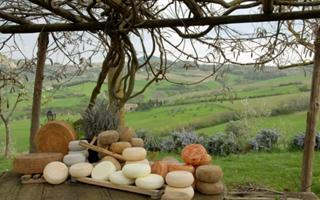 Enjoy Tuscan Red Wine and Pecorino Cheese. Things to do in Pienza