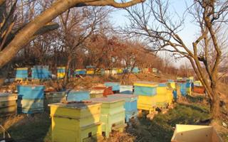 The Bees' world.. Things to do in Bolotana