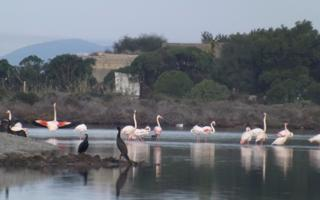 Passeggiata naturalistica . Things to do in Sant'Antioco