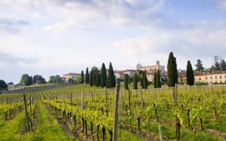 Wine experience in Franciacorta region. Things to do in Brescia