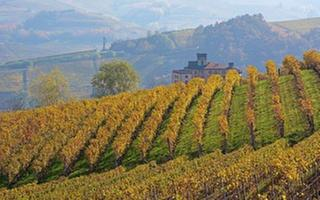 Wine Lover tour: Discovering Barolo. Things to do in Bra