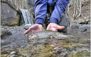 Pesca alla trota con trainer. Things to do in Morozzo