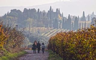 Taste the best wines in Valpolicella, from the winemaker!. Things to do in Verona