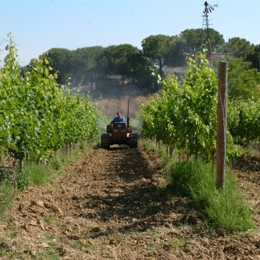 The Farm Experience of the heart of Tuscia, between Rome and Toscana. Things to do in Piramide