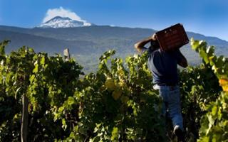 The Etna Wine Route. Things to do in Santa Venerina